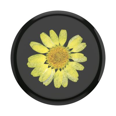 Pressed Flower Yellow Daisy