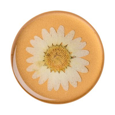 Pressed Flower White Daisy